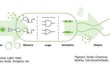 Yaşayan Bitleri İnsan-Bilgisayar Etkileşimine Entegre Etme
